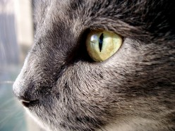 Evil Cats: Why the Bad Behavior?
