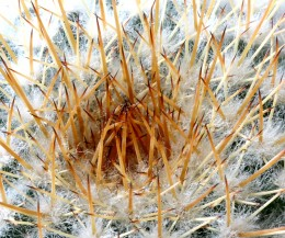 Cactus plants come in all different shapes and sizes. Growing cactus plants from seed is easier than you might think