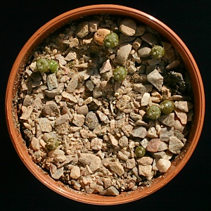 Cactus seedlings are very small and grow very slowly