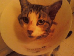 After his surgery, he has his drainage tube.