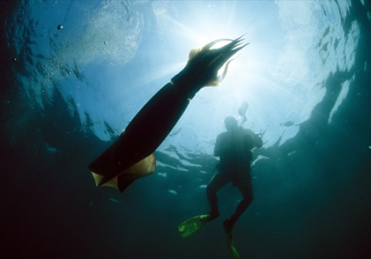 His own set of fins propels a diver swimming near a giant squid ( Architeuthis dux) in the Gulf of California in Mexico. Relatively small fins keep the squid moving and help it maintain balance in the water.