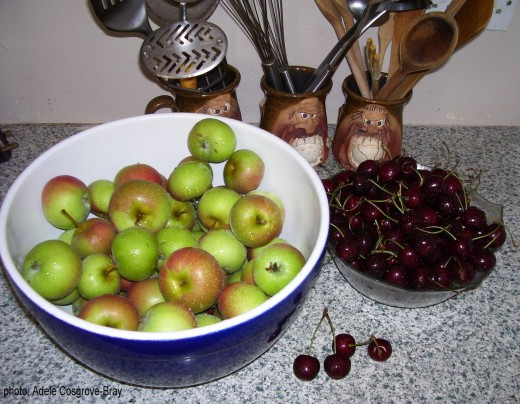 Apples and cherrys, harvested and ready to be preserved as jam.