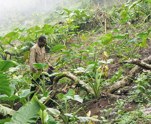 A subsistance farmer...what does sustainability mean to him if he no longer has a market for his crop?
