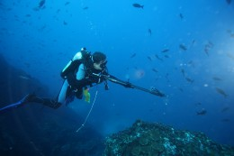 Example of someone spearfishing for sharks.