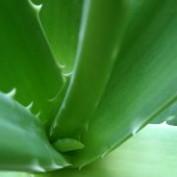 Natural Remedy profile image