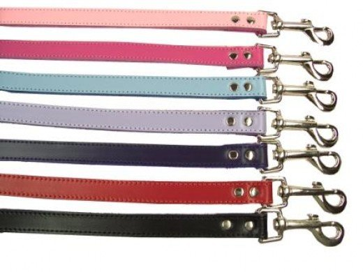 Dog leashes come in a variety of styles.  Make sure to find one that suits you and your dogs needs.