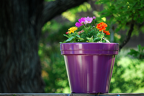 A brightly colored pot can add to the vibrant color of your flowers.