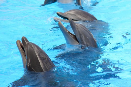 Enjoy a Clearwater Beach dolphin encounter.
