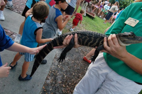 My daughter petting a crocodile at the zoo.  All for free! Photo by AMB