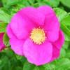 RoseGardenAdvice profile image