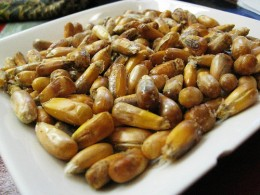 Large kernels, heated with oil or butter in a skillet, popped, and salted.