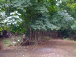 """The """"forest"""" behind my house"""