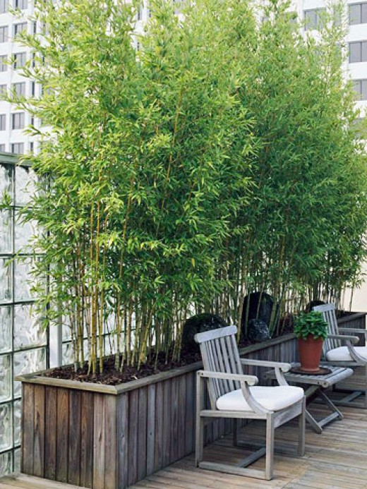 Pen 39 s blog sun loving container plants for roof garden screen Bamboo screens for outdoors