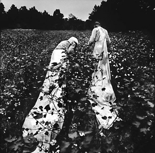 Picking Cotton. As a Child, I could Pick the Same Amount as the Best Adults. I would pick 300 lbs Per Day and Make $3