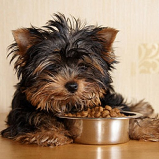 Make Sure Your Dog Chows Down on Healthy, Hypoallergenic Dog Food