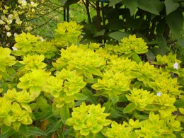 A bright yellow flower shines like the sun in spring!