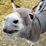 donkeyz1 profile image