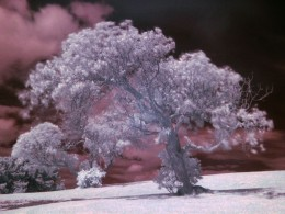 Example of Infrared photography
