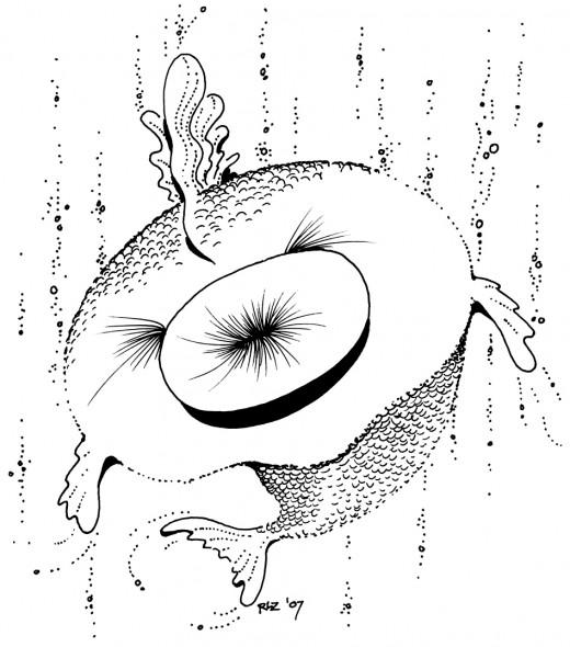 Puckerfish, rickzimmerman 2010