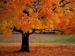 What does fall mean to you?