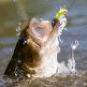 Wayne Orvisburg profile image
