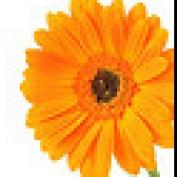 alonghub profile image
