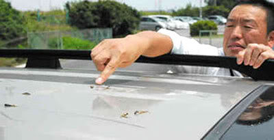 Mr.Aichi found the frog rain in the car roof