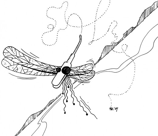 Erratic Flight Path of the Asymmetrical Dragonfly, rickzimmerman 2010