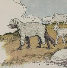 Sheep clothing flickr.com
