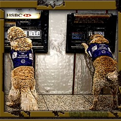 Helper Dogs (K-9 companions) take time from their busy day to do a little ATM banking.