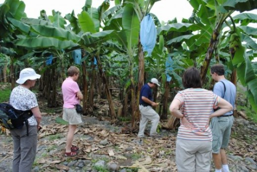 My Costa Rica tour guide giving us a tour of a banana plantation