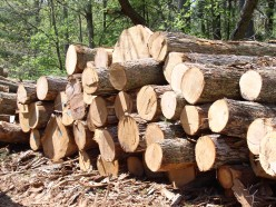 Mechanical Strength Properties of Timber