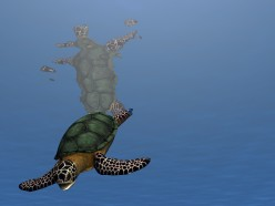 The Turtle-- Stories,Short  Story for and about Kids and Children