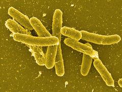 nasty, little salmonella bacteria!