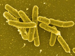 nasty, little salmonella bacteria!