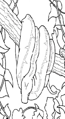Reptiles for Kids Coloring Pages Free Colouring Pictures to Print  - Reticulated Python