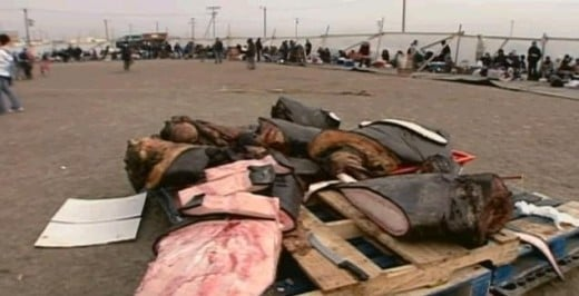 Eskimo traditional festival where whale meat is gathered for the people.
