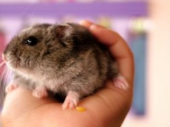 Pocket Pets: Dwarf hamsters and Syrian hamsters