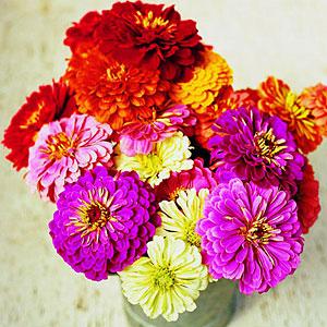 A beautiful bouquet of cut flowers.