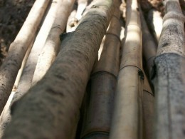 Bamboo  Image:Morguefile.com
