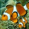 lipoteng profile image