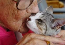 Pets and Seniors
