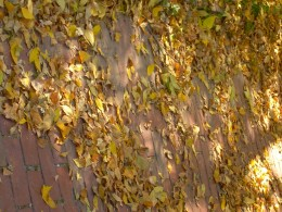 Leaves on a walkway in autumn