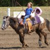 Finding the best horse for a beginner