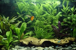 Showcase your artistic flair with wit and passion through fish tank hobby. Photo from livingsystemz.com