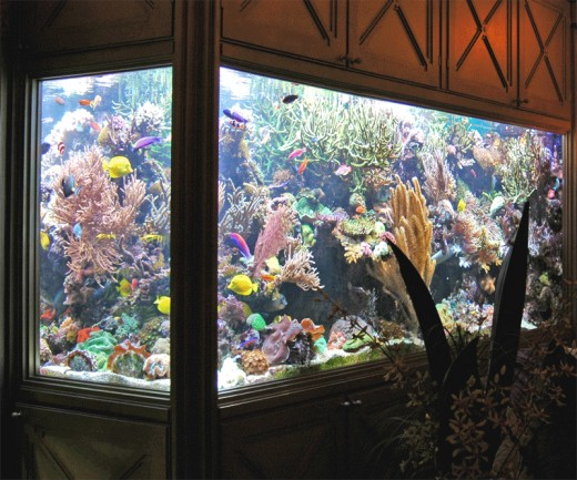 "A sure way to get a ""Fish of Mind,"" or should I say ""Peace of Mind,"" is immersing yourself with fish tank hobby."