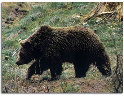 Wildlife and forests in Transylvania