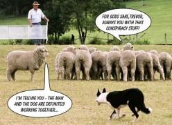 Do you feel safe in the Sheep Pen?