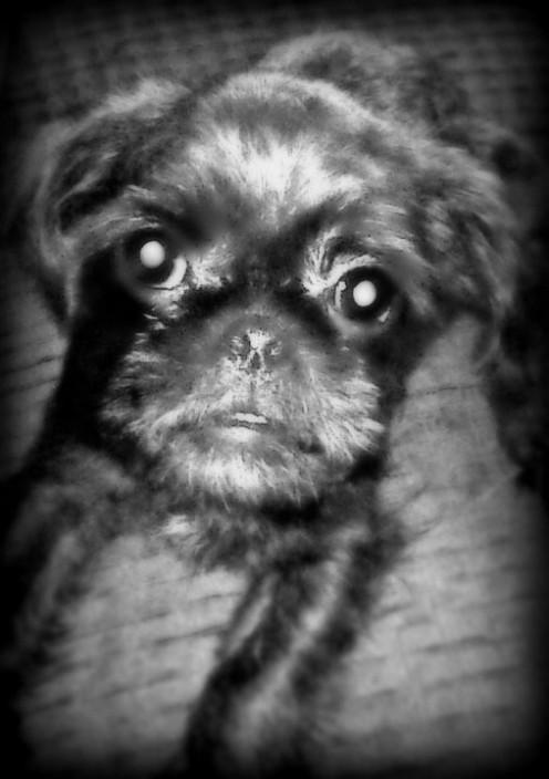 Dexter, 5 1/2 months old.