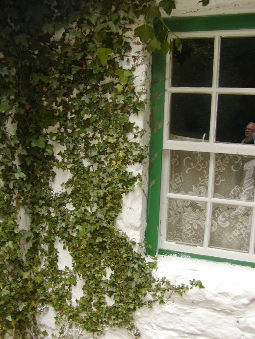 Ivy by a cottage window